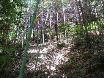 P1160813竹ヤブを抜けヒノキ林を登る.JPG
