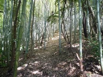 P1160827竹林を進む.JPG