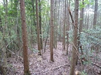 P1160863植林沿い.JPG