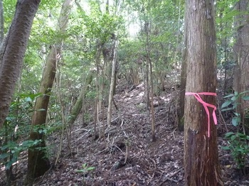 P1160877植林斜面を登る.JPG