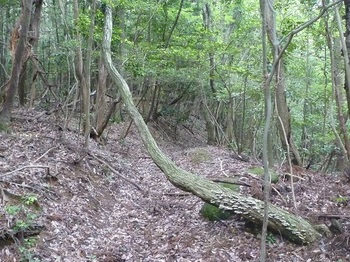 P1160904鞍部から北側へ下る山道.JPG
