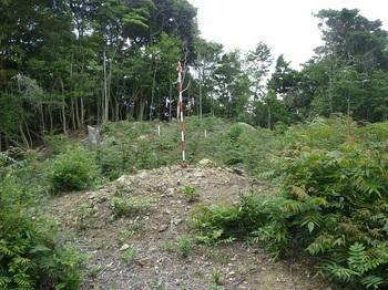 P1160911 400m測量伐採地・地籍図根三角点.JPG