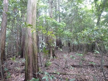 P1160923植林境.JPG