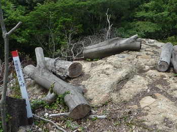 P1160930岩上の金属製地籍図根三角点.JPG
