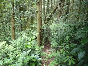 P1160935植林斜面の踏み跡.JPG