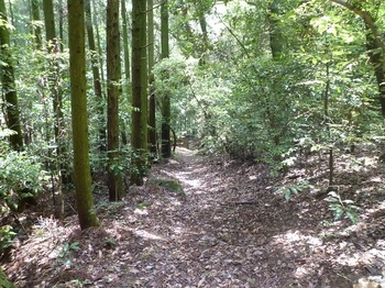 P1160939南方向の山道.JPG