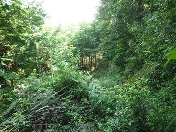 P1160997植林境へ出る.JPG