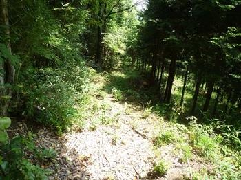 P1160999植林沿いの山道.JPG