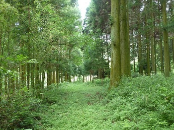 P1170013植林沿い.JPG