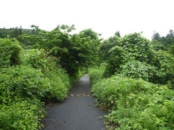 P1170026舗装林道.JPG