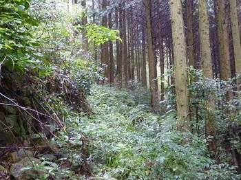 P1170034右側植林帯.JPG