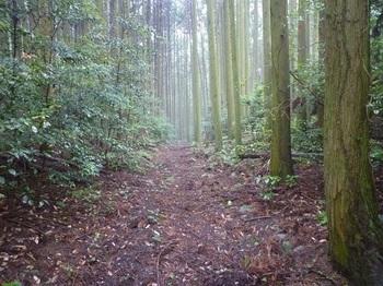 P1170080林道(左方向)(あさじヶ垰).JPG