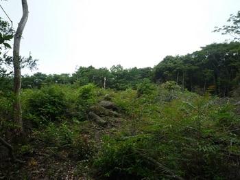 P1170089 320m測量伐採地.JPG