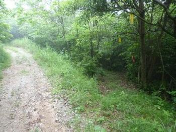 P1170129林道・巡視路分岐(逆方向).JPG