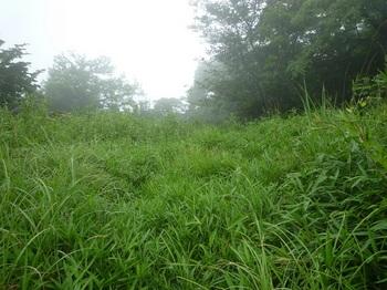 P1170141草被りの山頂.JPG
