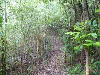 P1170153竹林沿い.JPG