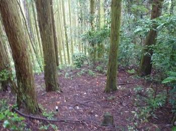 P1170169植林境沿い.JPG