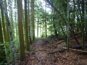P1170176植林沿い.JPG