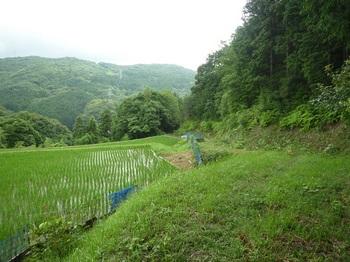 P1170177耕作地・林道へ出る.JPG