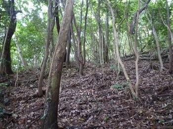P1170199雑木疎林斜面.JPG