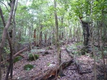 P1170209雑木疎林の支尾根.JPG