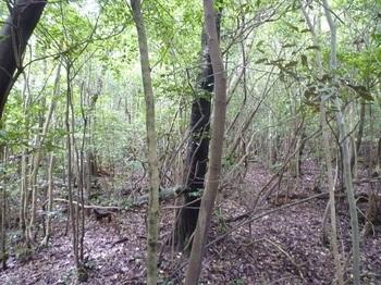 P1170222雑木疎林.JPG