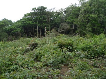 P1170236測量伐採地.JPG