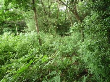 P1170242草被りの林道合流部.JPG