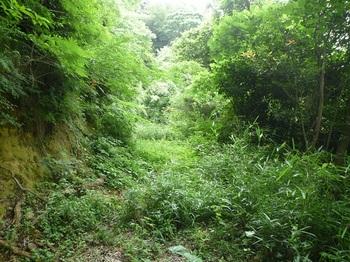 P1170245草被りの林道.JPG
