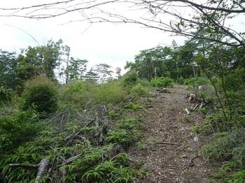 P1170281測量伐採地・地籍図根三角点.JPG