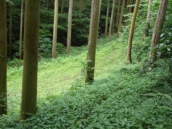 P1170307前方に林道.JPG