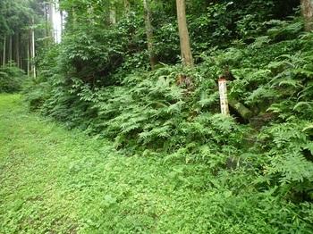 P1170308林道下降部(逆方向).JPG