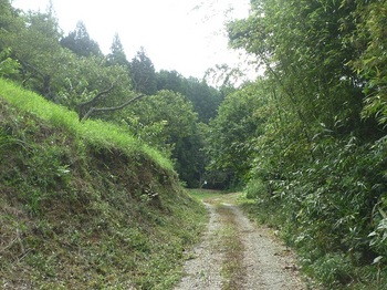 P1170323栗園沿い.JPG