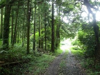 P1170324植林沿い.JPG