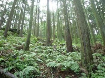 P1170332植林斜面.JPG