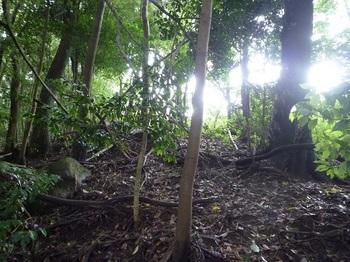P1170342左の雑木尾根へ逃げ込む.JPG