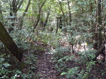 P1170365南側山道.JPG