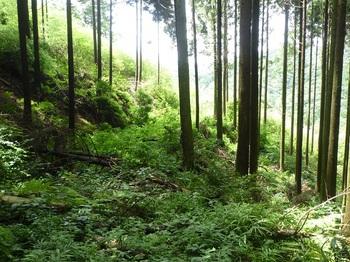 P1170380荒れ林道.JPG