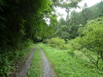 P1170404未舗装林道・栗園.JPG