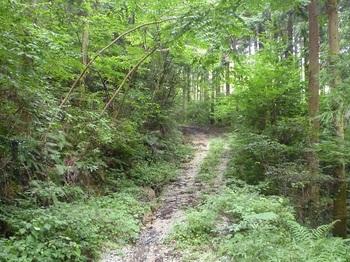 P1170416やや勾配のついた林道.JPG