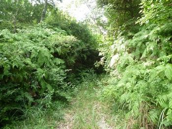 P1170420やや草被りの林道.JPG