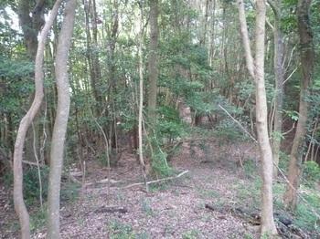 P1170429右の雑木疎林を進む.JPG