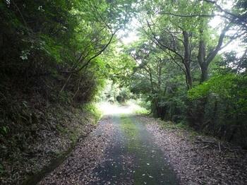 P1170467舗装林道.JPG