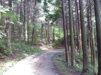 P1170537植林内の林道.JPG