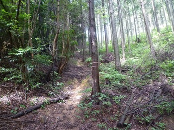 P1170547植林境の山道.JPG