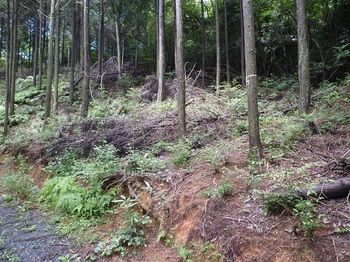 P1170577植林斜面取り付き.JPG
