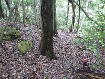 P1170600巻き道上のプラ杭・ヒノキ境木.JPG