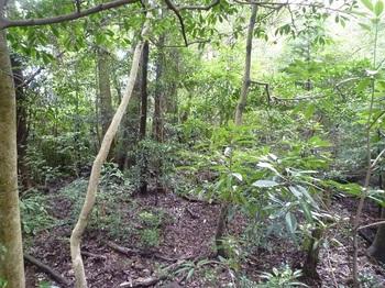 P1170606ヤブ気味の雑木林.JPG