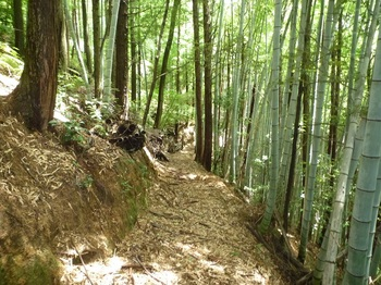 P1170641竹林沿いの巡視路.JPG
