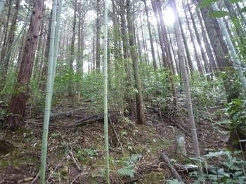 P1170675植林斜面.JPG